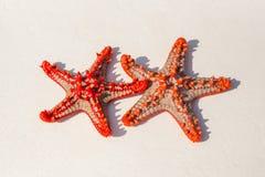 在沙子的海星 免版税库存照片