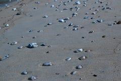 在沙子的海石头在伊维萨岛的海滩 图库摄影