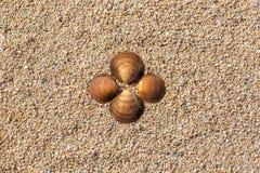 在沙子的海运壳 背景球海滩美好的空的夏天排球 顶视图 文本的空间 库存照片