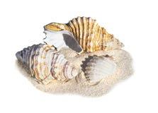 在沙子的海滩壳 免版税图库摄影
