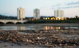在沙子的漂泊竹子在河边缘 库存图片