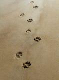 在沙子的爪子 免版税图库摄影