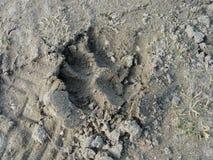 在沙子的爪子 免版税库存图片
