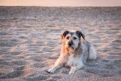 在沙子的狗 免版税库存照片