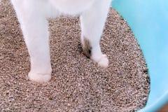 在沙子的猫爪子,特写镜头 使用洗手间的在垃圾箱的猫,猫,为了pooping或者小便, pooping在干净的沙子洗手间 库存照片