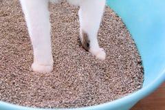 在沙子的猫爪子,特写镜头 使用洗手间的在垃圾箱的猫,猫,为了pooping或者小便, pooping在干净的沙子洗手间 免版税库存照片