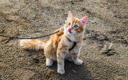 在沙子的猫 库存图片