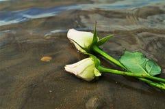 在沙子的玫瑰 库存图片