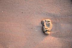 在沙子的珊瑚与头奇怪的形状  免版税库存图片