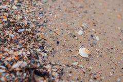 在沙子的白色壳 免版税库存图片