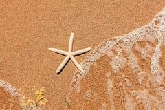 在沙子的白色海星 免版税图库摄影