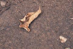 在沙子的秋天叶子 免版税图库摄影