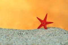 在沙子的红色海星在日落天空背景  免版税库存照片
