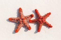 在沙子的红色海星 免版税库存图片