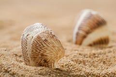 在沙子的美丽的贝壳 免版税库存照片