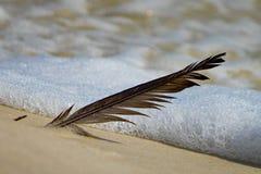在沙子的羽毛 库存照片