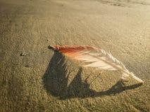 在沙子的羽毛 免版税库存照片