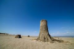 在沙子的老树桩 免版税库存图片