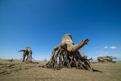 在沙子的老树桩 库存图片