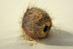 在沙子的老椰子。 图库摄影