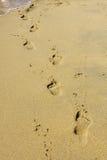在沙子的脚印在日落 库存图片