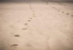在沙子的脚印在海滩 免版税图库摄影