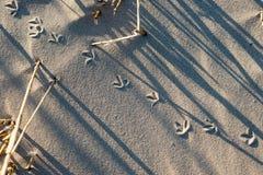 在沙子的脚步在海边 免版税库存图片