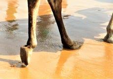 在沙子的脚步 免版税库存照片