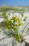 在沙子的花在海滩 免版税库存图片