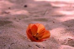 在沙子的花 免版税库存照片
