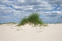 在沙子的草在波罗的海 库存图片