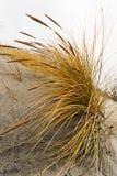 在沙子的草 库存照片