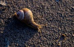在沙子的蜗牛 免版税库存图片