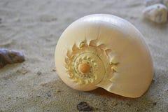 在沙子的螺旋海壳 库存图片