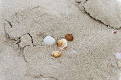 在沙子的贝壳在海滩 免版税库存图片