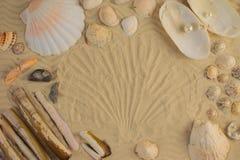 在沙子的贝壳-复制空间 库存图片