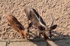 在沙子的野生生物面孔 免版税库存照片