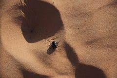 在沙子的金龟子甲虫 免版税库存图片