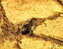 在沙子的飞行 库存照片