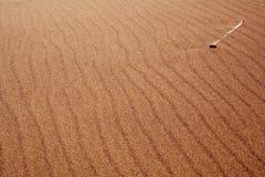 在沙子的骨头 免版税库存照片