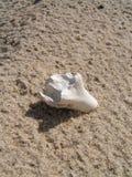 在沙子的骨头 库存图片