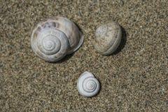 在沙子的3只蜗牛 免版税图库摄影