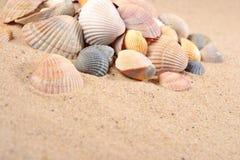 在沙子的贝壳特写镜头 库存图片