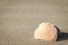 在沙子的贝壳 库存图片