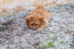 在沙子的滑稽的小狗 免版税库存照片