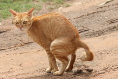 在沙子的黄色猫 库存照片