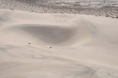 在沙子碗的小猎犬 免版税图库摄影