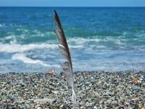 在沙子种植的海鸥羽毛 库存图片