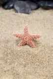 在沙子背景的海星 库存图片