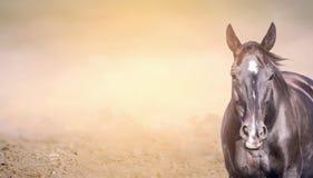 在沙子背景,横幅的马 免版税库存图片